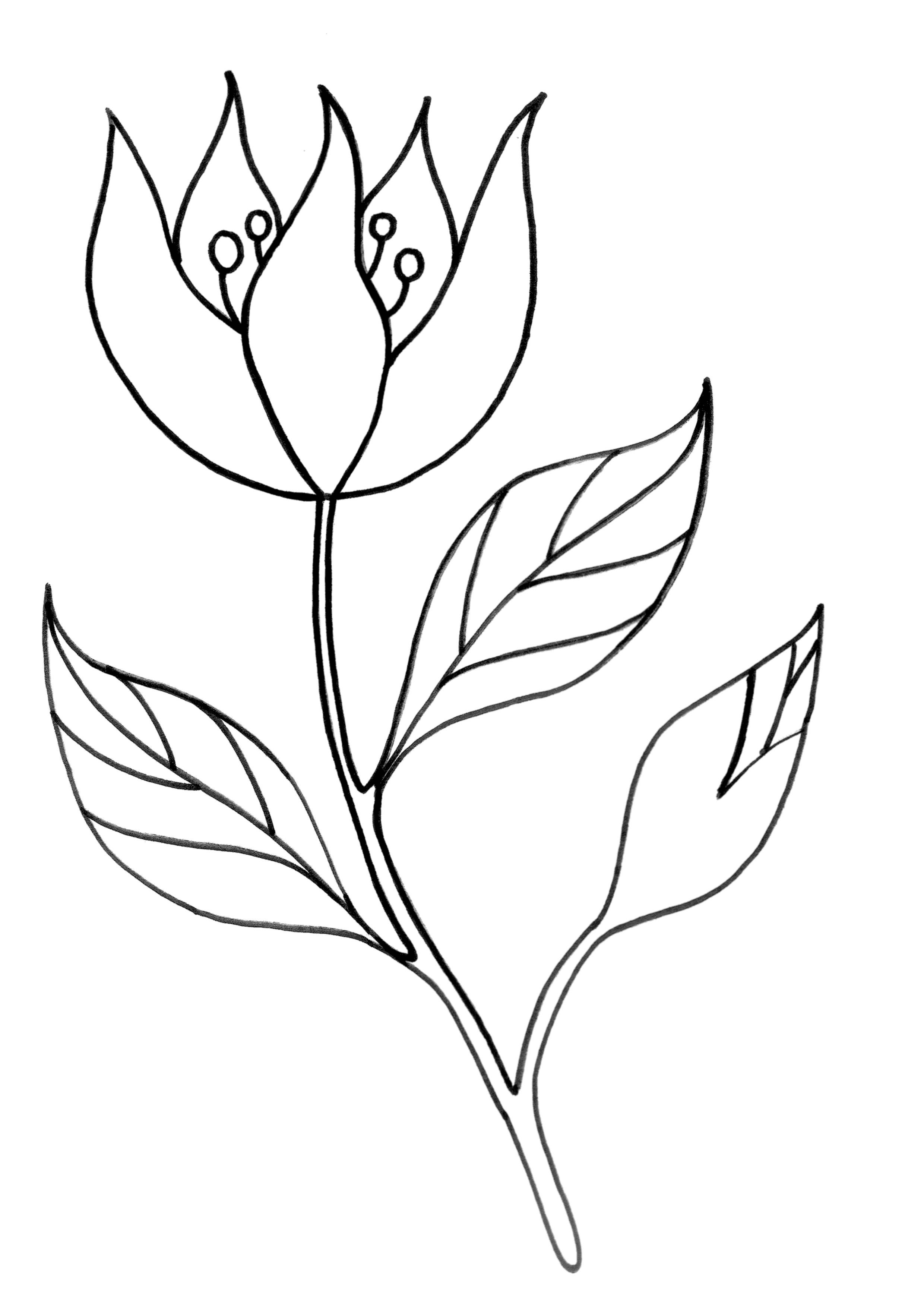 Dibujos hermosos para colorear y pintar for Papel para dibujar