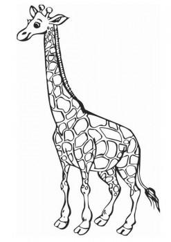 colorear jirafas