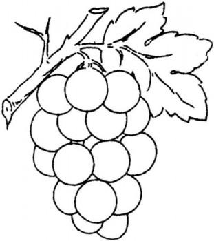 colorear uva