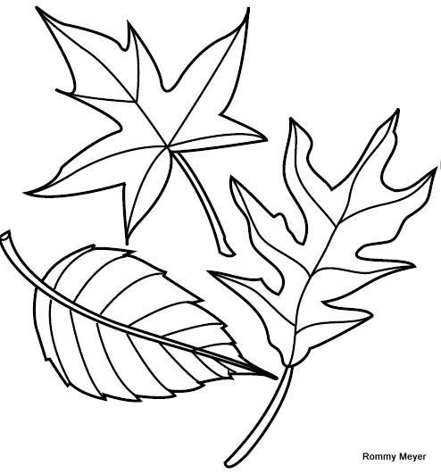 dibujo-de-hojas-para-colorear.jpg