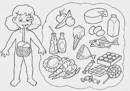 El Sistema Digestivo Para Ninos