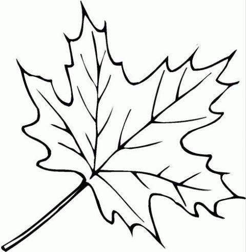 dibujos-de-hojas-para-colorear.jpg