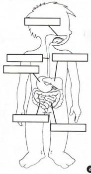 dibujos de sistema digestivo para colorear