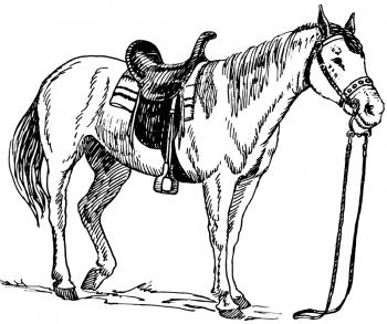 imágenes de caballos para colorear