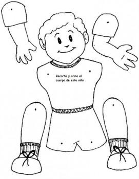 imagen del cuerpo humano para colorear