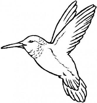 ave para colorear