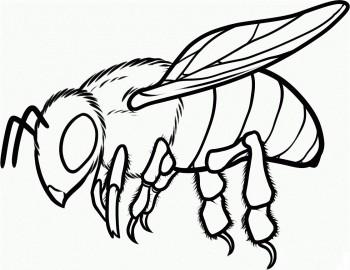 colorear abeja