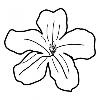 colorear dibujos de flores