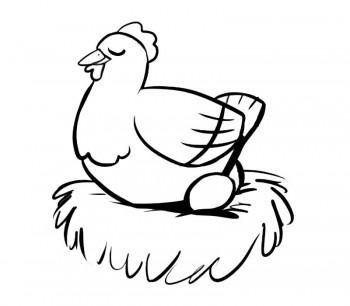 colorear gallinas