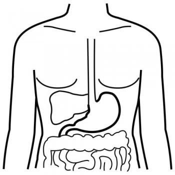 colorear sistema digestivo