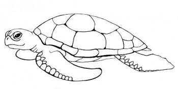 colorear tortugas