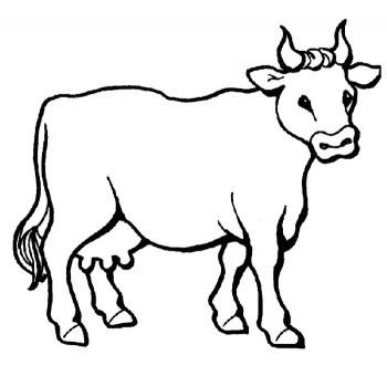 colorear vacas