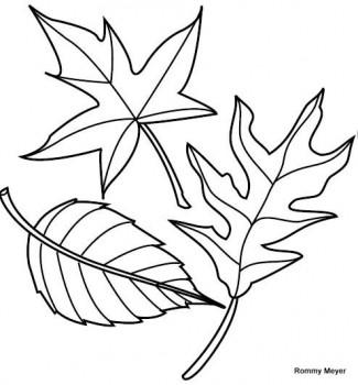dibujo de hojas para colorear