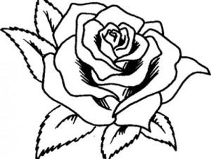 dibujo de rosa para colorear