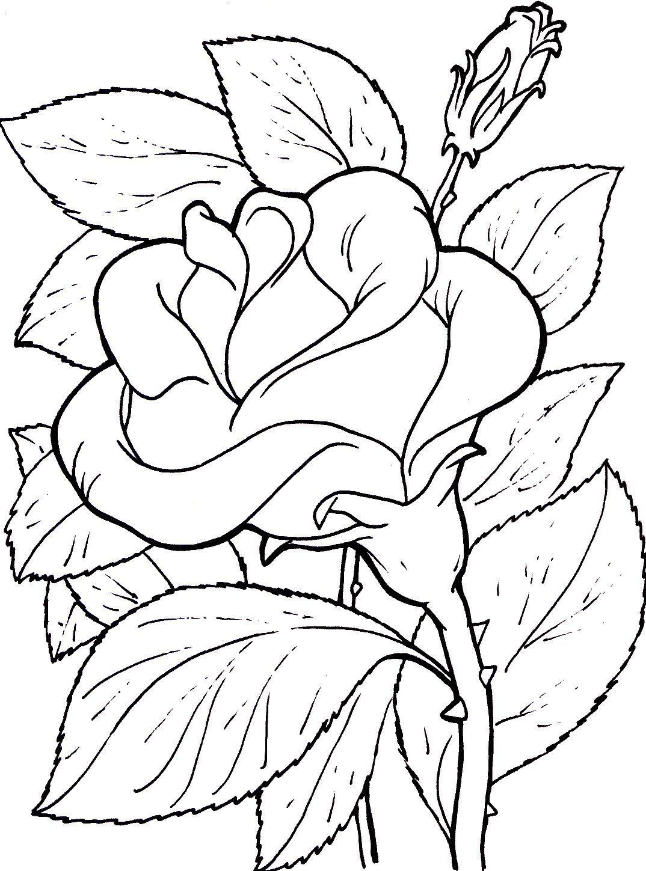 Imágenes De Rosas Para Colorear