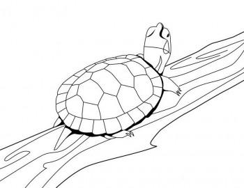 tortuga para colorear